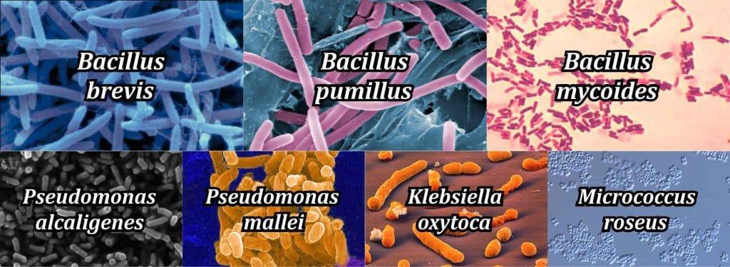 bakteri yang terdapat pada pupuk organik cair