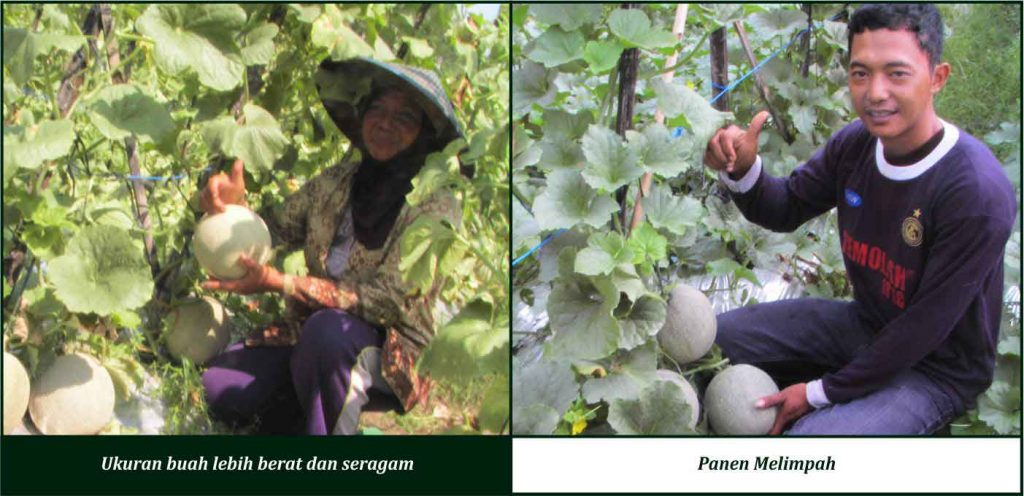 cara meningkatkan hasil kebun