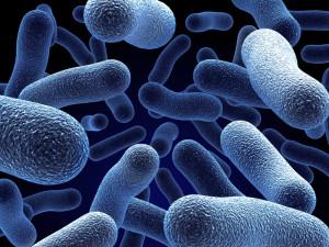 bacteria pada pupuk organik cair