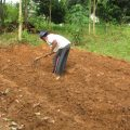 cara mengelola lahan pertanian