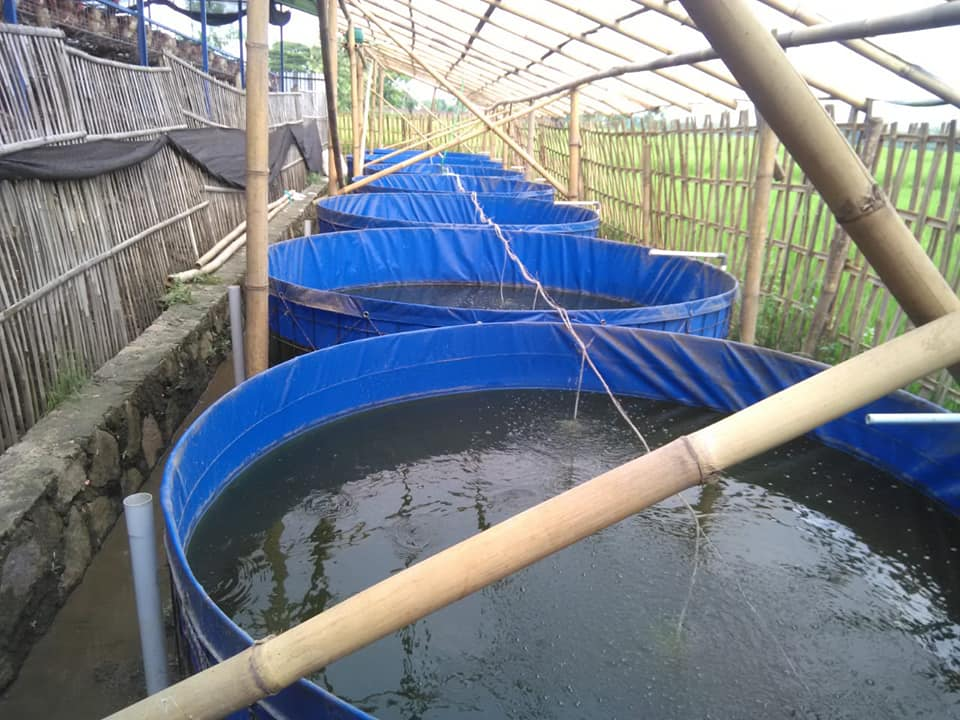 kolam bioflok