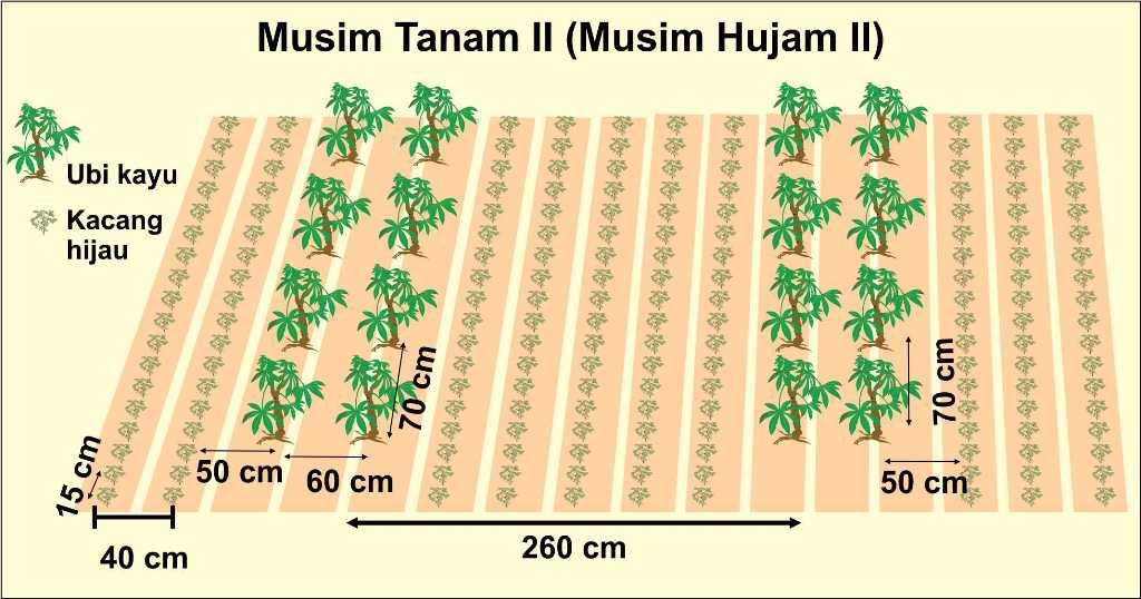 jarak tanam kelapa sawit