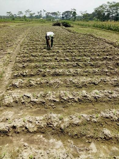 pemupukan dan pengolahan tanah