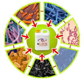 kandungan bakteri pupuk organik cari gdm