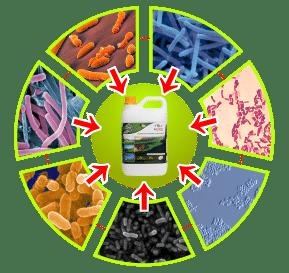 bakteri pupuk organik cair gdm spesialis golf
