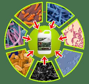 bakteri pupuk organik cair gdm spesialis kelapa sawit