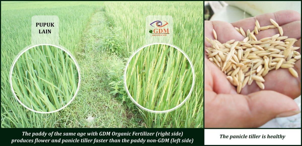 bio organic fertilizer agriculture