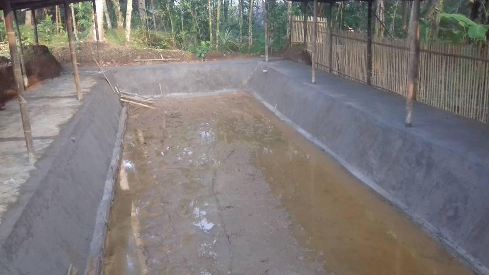 kolam gurame