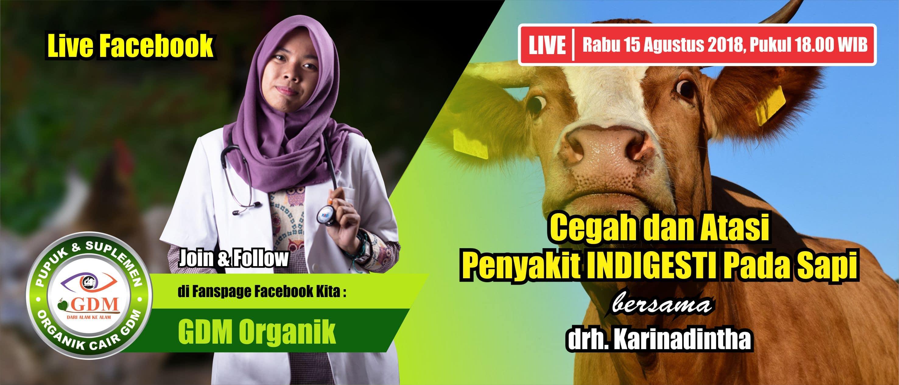 penyakit indigesti pada sapi