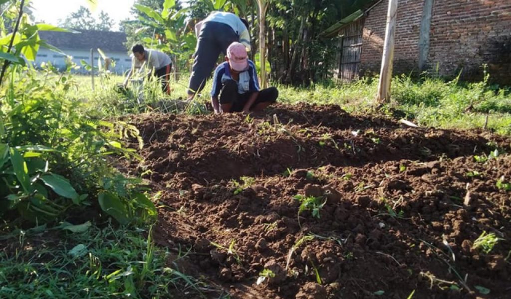 persiapan lahan strawberry